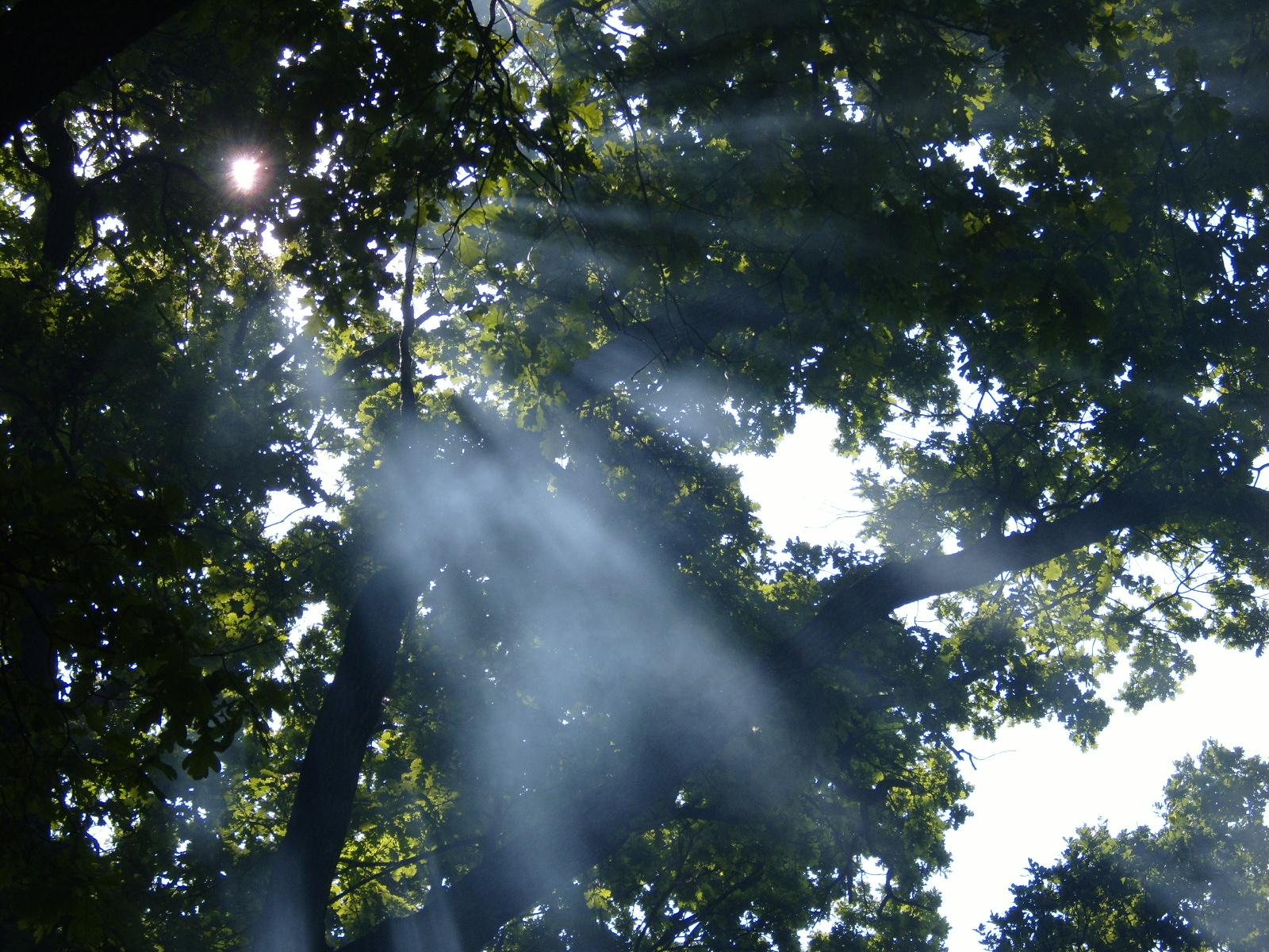 Padurea Cernica
