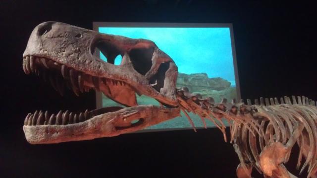 dinozauri, argentina, baneasa shopping city, mall