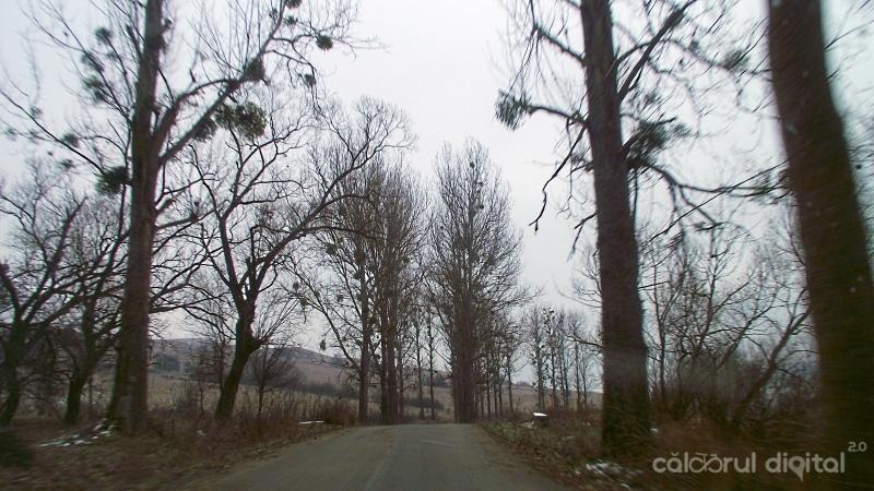 Vâsc în copacii de pe marginea drumului dintre Bunești și Viscri