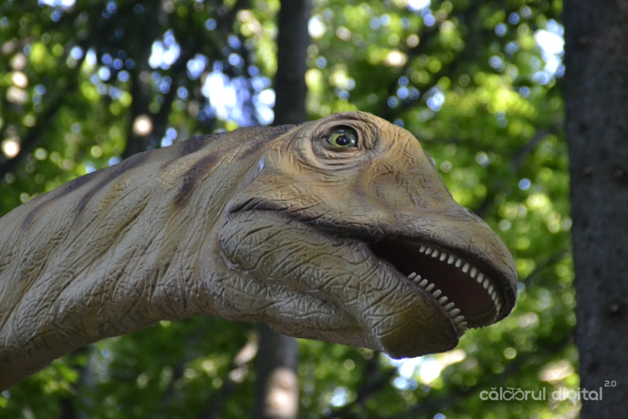 Dino-Parc-Rasnov-(20)-Diplodocus
