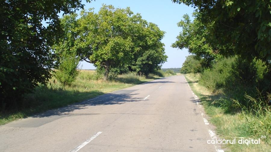MTB, Calarasi, Giurgiu, sosea, copaci