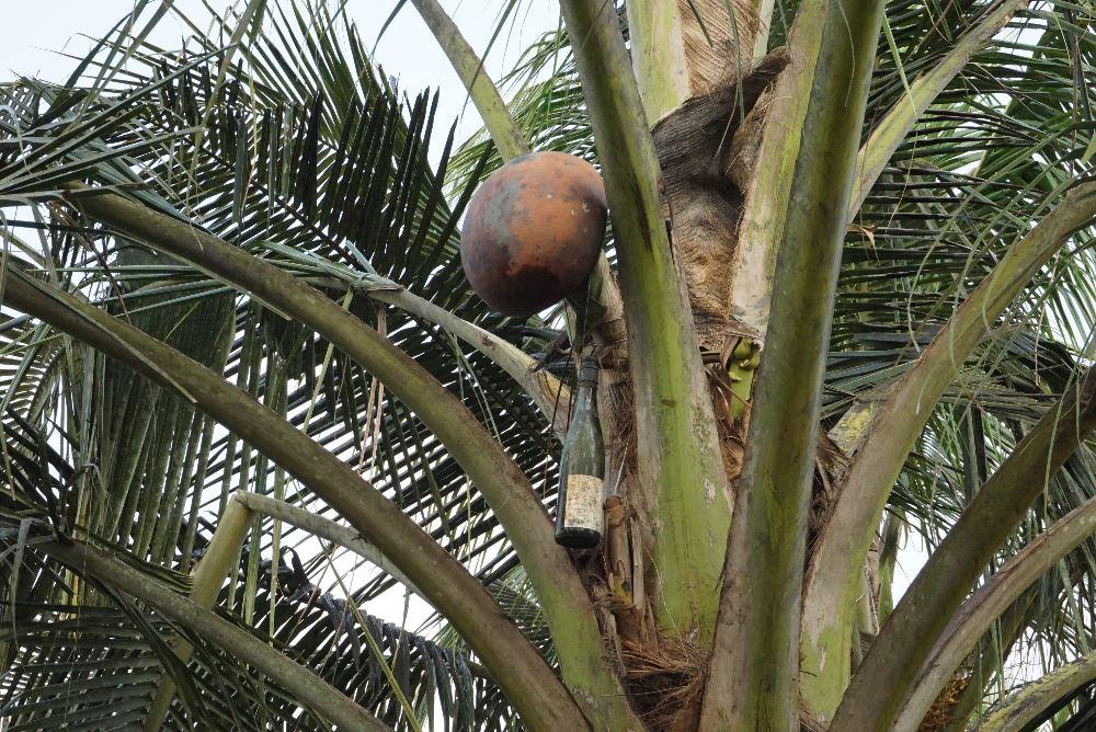 kerala, ecoturism, palm juice