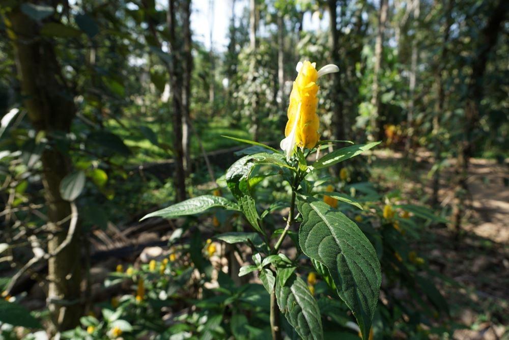 kerala, ecoturism, plantatie mirodenii