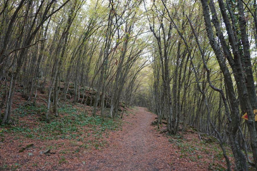 Traseul prin pădure, Dreanovo
